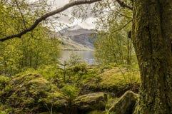 Paysage écossais près de lac Images stock