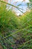 Paysage élevé d'herbe Image stock
