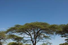 Paysage éthiopien Images stock
