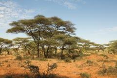 Paysage éthiopien Photo libre de droits