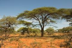 Paysage éthiopien Photographie stock libre de droits