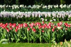 Paysage étonnant avec les lits de fleur et les modèles de fleur colorés Photo stock