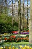 Paysage étonnant avec les lits de fleur et les modèles de fleur colorés Photos libres de droits