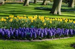 Paysage étonnant avec les lits de fleur et les modèles de fleur colorés Photo libre de droits