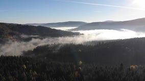 Paysage étonnant d'automne en montagnes carpathiennes Brouillard de matin au-dessus de la vallée, forêts coniféres sur les pentes banque de vidéos
