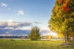 Paysage étonnant d'automne en parc coloré dans la soirée ensoleillée Arbres et ciel colorés de vanille en octobre Automne photo stock