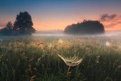 Paysage étonnant de ressort avec le champ de bloomig Photographie stock