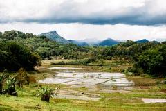 Paysage étonnant de Sualwesi du sud, Rantepao, Tana Toraja, Indonésie Le riz met en place avec de l'eau, montagnes, ciel nuageux image libre de droits