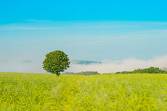 Paysage photographie stock