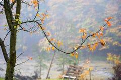 Paysage Photo stock