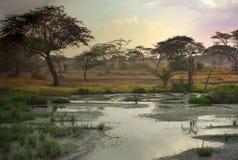 Paysage africain Photo libre de droits