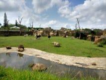Paysage africain dans le zoo photo stock