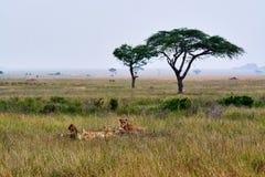 Paysage africain de beauté image stock