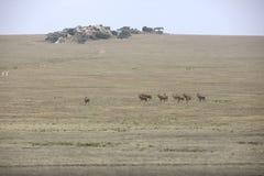 Paysage africain tandis que dans le safari photos libres de droits