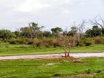Paysage Afrique Images stock