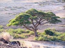 Paysage Afrique Photographie stock libre de droits