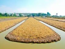 Paysage agricole Photos libres de droits