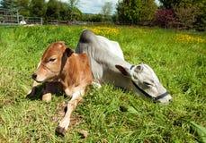 Paysage agricole au Pays de Galles Image libre de droits