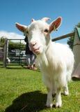 Paysage agricole au Pays de Galles Images stock