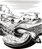 Paysage agricole cultivé, avec les potirons mûrs Photos stock