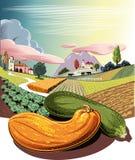 Paysage agricole cultivé, avec les potirons mûrs Photographie stock libre de droits