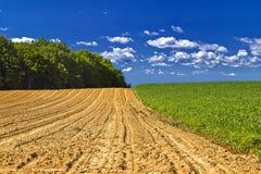 Paysage agricole - jeune champ de maïs photo libre de droits