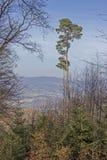 Paysage allemand Odenwald Photo libre de droits
