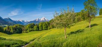 Paysage alpin Springlike de montagne avec des fleurs et des arbres fruitiers de floraison photo libre de droits