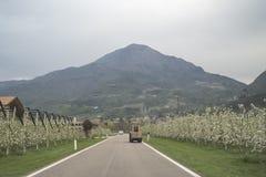 Paysage au-dessus de pomme et de raisins de vallée de trentino Photos stock