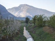 Paysage au-dessus de pomme et de raisins de vallée de trentino Images libres de droits