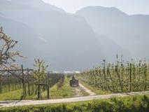 Paysage au-dessus de pomme et de raisins de vallée de trentino Image libre de droits