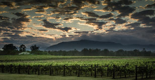 Paysage australien de vignoble Photo stock