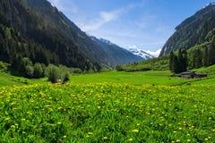 Paysage autrichien avec des prés et des montagnes pendant le printemps L'Autriche, le Tirol, Zillertal, Stillup Photographie stock