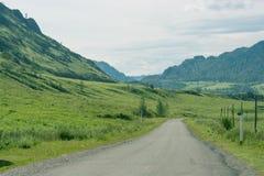 Paysage avec des arbres de montagnes Images libres de droits
