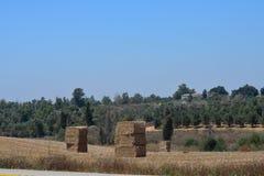 Paysage avec des arbres et des cubes en chaume Photo libre de droits