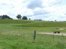 Paysage avec des barrières, prés, vignobles photos libres de droits