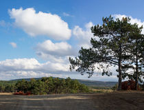 Paysage avec des collines, des pins et des nuages Image stock
