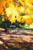 Paysage avec des feuilles d'automne Rétro filtre de style, feuilles d'érable Image stock