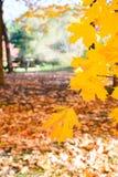 Paysage avec des feuilles d'automne Rétro filtre de style, feuilles d'érable Photos stock