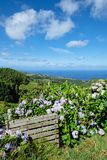 Paysage avec des hortensias - îles des Açores Images stock