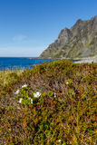 Paysage avec des montagnes et des fleurs de faux mûrier Images libres de droits