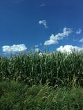 Paysage avec des nuages Images stock