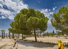Paysage avec des palmiers et un arbre Photo stock
