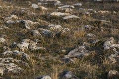 Paysage avec des roches Photo stock