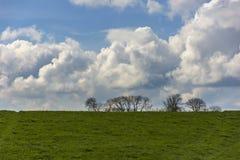 Paysage avec des silhouettes d'arbre sur le fond et un champ sur le premier plan Ciel nuageux dans un jour ensoleill? photographie stock