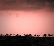 Paysage avec des silhouettes des arbres au coucher du soleil Photos stock