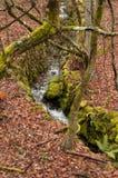 Paysage avec des textures d'automne Photos stock