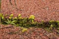 Paysage avec des textures d'automne Photographie stock libre de droits