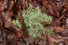 Paysage avec des textures d'automne Photo stock