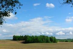Paysage avec du bois une branche photos stock